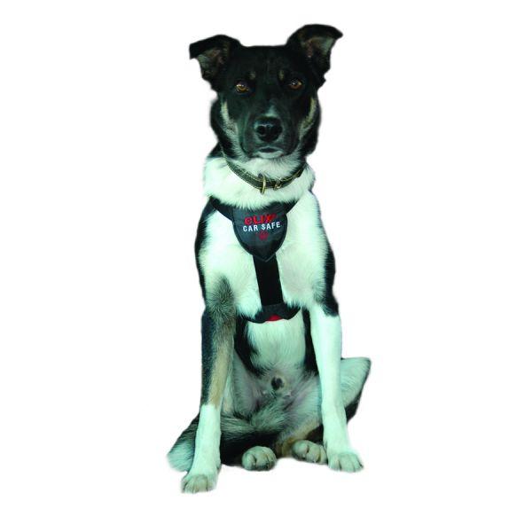 company of animals clix autogordel #95;_medium
