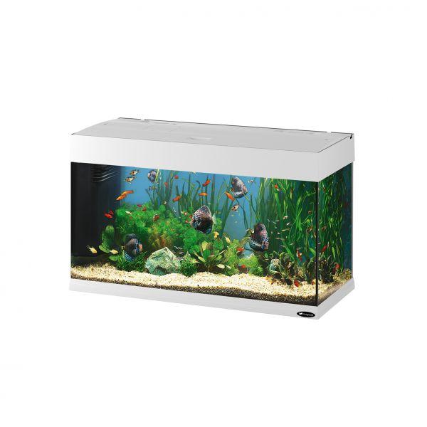 Ferplast aquarium dubai 80 wit